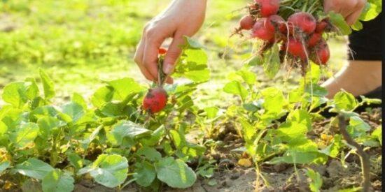 Para Kazandıran En Karlı Tarım Ürünleri