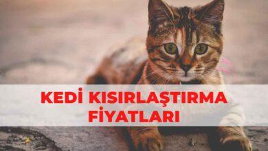 İstanbul Kedi Kısırlaştırma Fiyatları