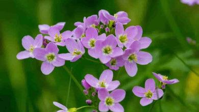 Şifalı Ot ve Bitki Yetiştiriciliği Maliyeti
